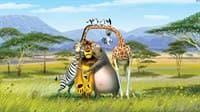 Обои PHOTO DECOR Мадагаскар 539 2*2,7 м